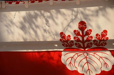 太閤幕と影桜