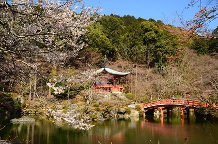 弁天堂を彩る桜