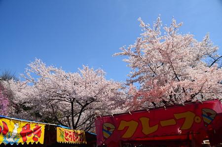 桜の平野神社