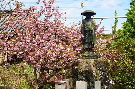 関山咲く上品蓮台寺