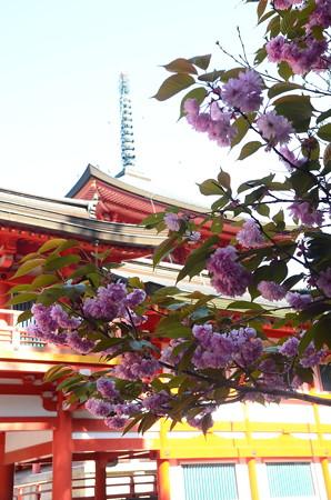 東塔と関山