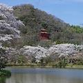 Photos: 静寂の春景色