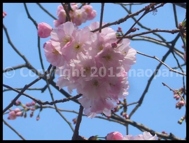 Photos: P3030646