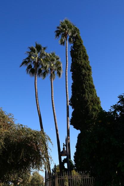 Palm Trees&Blue Sky