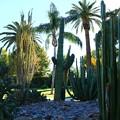 写真: ガーデン…Arizonaスタイル