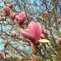 Magnolia♪