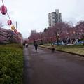 Photos: 榴ヶ岡公園2