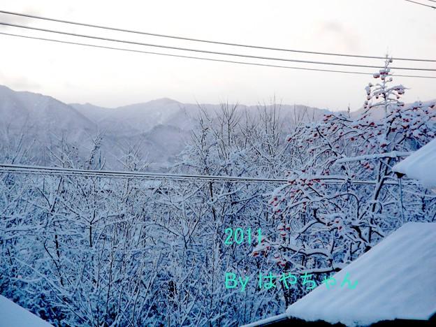 Photos: 2011年クリスマス 早朝