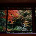 『秋のある庭。。。』