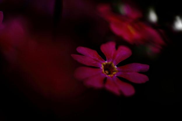Photos: IMG_4120