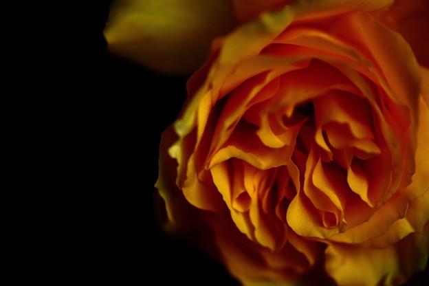 Photos: IMG_4130