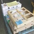 写真: チーズのリステリア検査-札幌