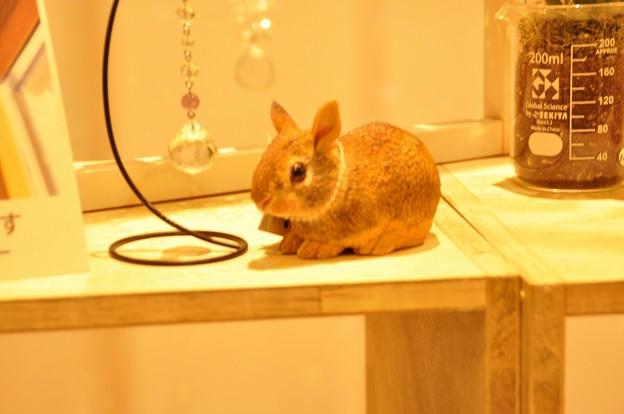 ウサギ(ソラマチのショップにて)