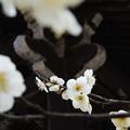 春色ほころぶ