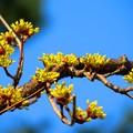 春を告げる花2