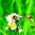 Photos: 花と蜻蛉