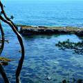 五浦海岸 (2)