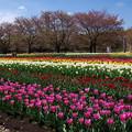 PATIOの春♪