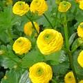 写真: 野の花ー2