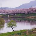 大河原ひと目千本桜-06376