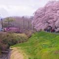 大河原ひと目千本桜-06368