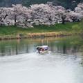 写真: 大河原ひと目千本桜-06338