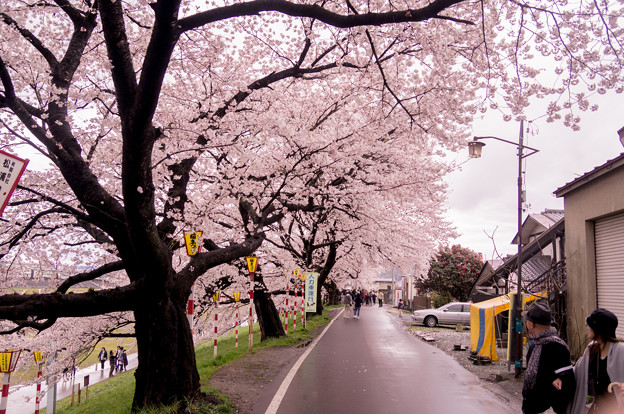 Photos: 大河原ひと目千本桜-06333