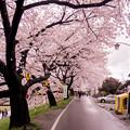 大河原ひと目千本桜-06333