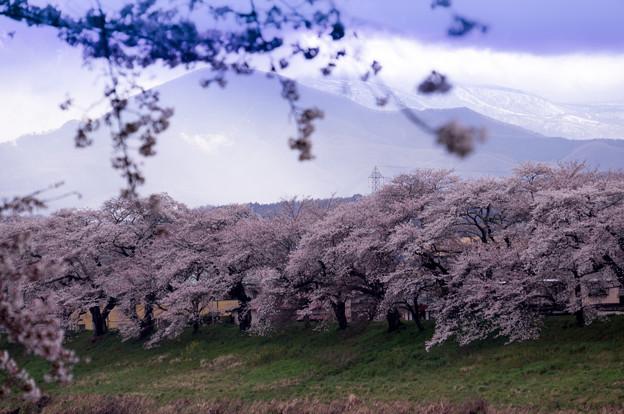 写真: 大河原ひと目千本桜-06386