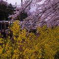写真: 大河原ひと目千本桜-06377