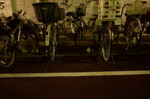 自転車置き場のネコ2匹