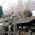 Photos: 大須商店街:三輪神社の「淡墨桜」が満開♪(2015/3/22)No - 1