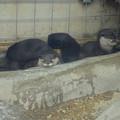 写真: 春の東山動植物園 No - 017:とっても可愛らしかった、コツメカワウソの子供