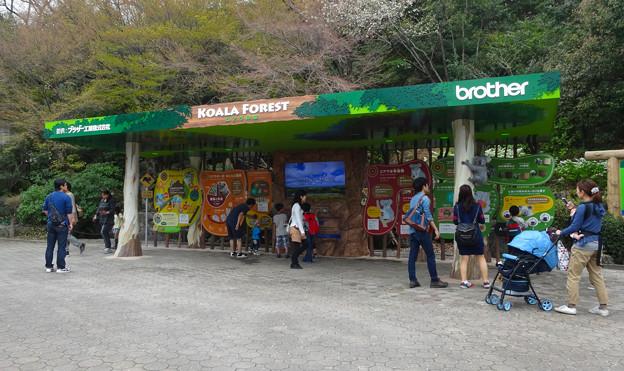 春の東山動植物園 No - 064:リニューアルされた(?)コアラ舎前の施設「コアラの森」