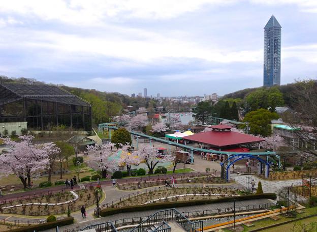 写真: 春の東山動植物園 No - 077:バラ園の展望台から見た景色(2015/4/4)