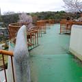 写真: 春の東山動植物園 No - 080:バラ園の展望台