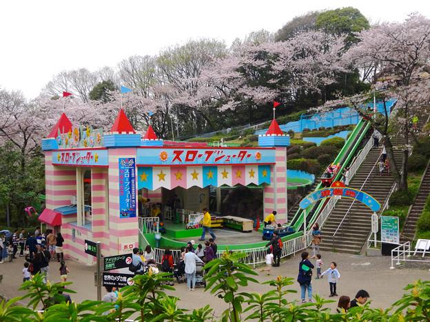 写真: 春の東山動植物園 No - 135:50周年を迎えた「スロープシューター」(2015/4/4)