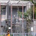 写真: 春の東山動植物園 No - 139:53歳(1962年生まれ)!?の、トキイロコンドル