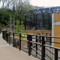 写真: 春の東山動植物園 No - 162:新しくなったハクトウワシ舎