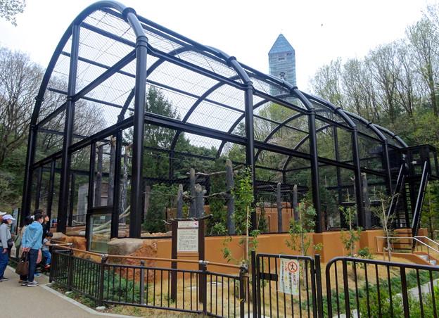 春の東山動植物園 No - 188:新しくなったハクトウワシ舎