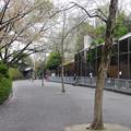 Photos: 春の東山動植物園 No - 192