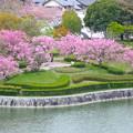 Photos: 桜の時期、水の塔から見下ろした落合公園(2015/4/7)No - 14