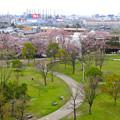 Photos: 桜の時期、水の塔から見下ろした落合公園(2015/4/7)No - 15