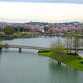 Photos: 桜の時期、水の塔から見下ろした落合公園(2015/4/7)No - 20