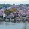 Photos: 桜の時期、水の塔から見下ろした落合公園(2015/4/7)No - 22