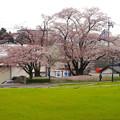 写真: 桜の時期、水の塔から見下ろした落合公園(2015/4/7)No - 44