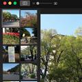 Photos: OSX「写真」アプリ:編集時、左側に同じアルバム内の写真を表示 - 1