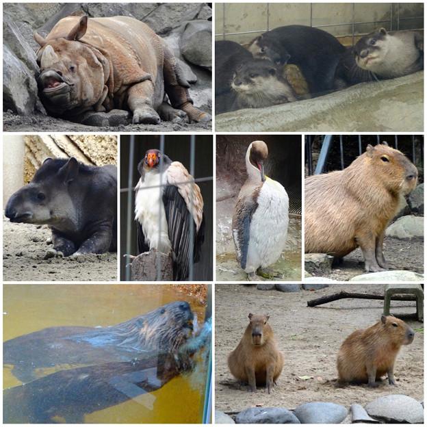 東山動植物園の様々な動物たち - 1
