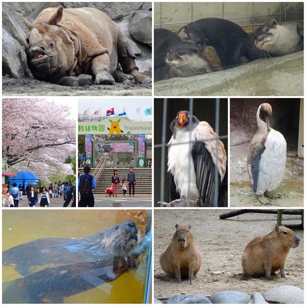 東山動植物園の様々な動物たち - 2
