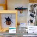 写真: 東急ハンズで売ってた、昆虫の標本